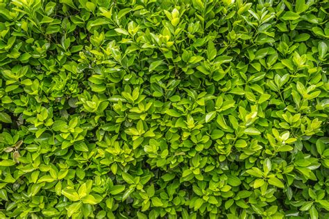 free images nature wood texture leaf flower food spring green herb produce evergreen