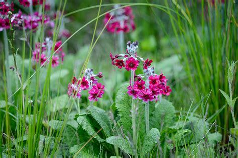 flowering plants for d shade gardenersworld com