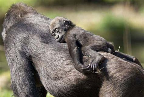imagenes animales peligrosos cientos de imagenes animales salvajes