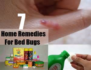 how to bed bugs home remedies 7 home remedies for bed bugs treatments cures