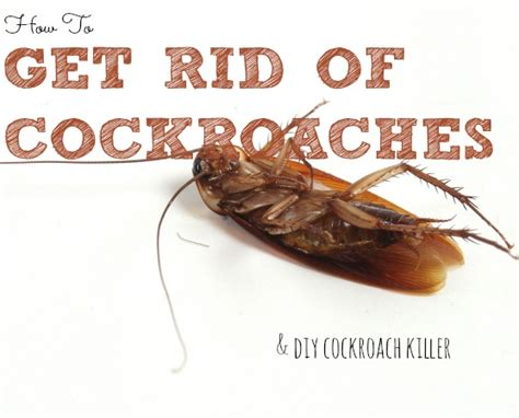 how to get rid of cockroaches in house how to get rid of cockroaches how to instructions