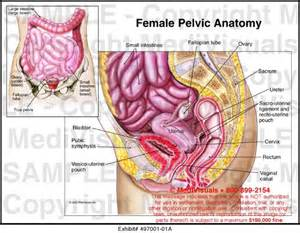 pelvic area pictures the saga of the retroverted uterus continues stomalicious