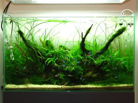 Amano Aquascape by Takashi Amano Aquascape