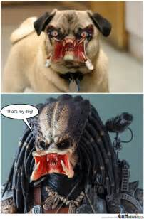 Child Predator Meme - predator pug by gaztasterofpork meme center