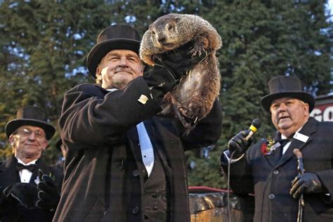 groundhog day phil groundhog day spotlights america s favorite weather animal