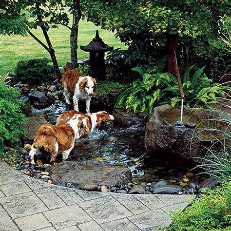 dog friendly backyard ground cover best 25 dog friendly backyard ideas on pinterest dog