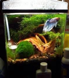 Fish on Pinterest   Betta, Betta Fish and Betta Tank