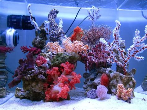 Soft Aquarium dsps tank from thailand 1000 gallon beautiful soft