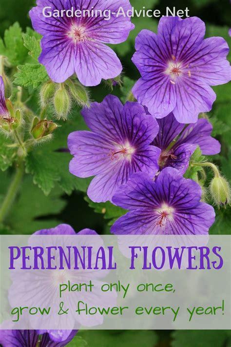 perennial garden plants flower gardening advice for