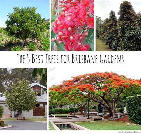 trees  brisbane gardens seed landscape design