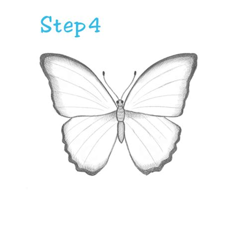 butterfly drawing for beginners archives pencil drawing