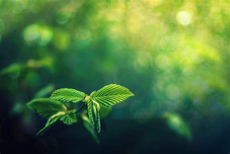 imagenes de naturaleza verdes fondos de pantalla follaje verde naturaleza descargar imagenes