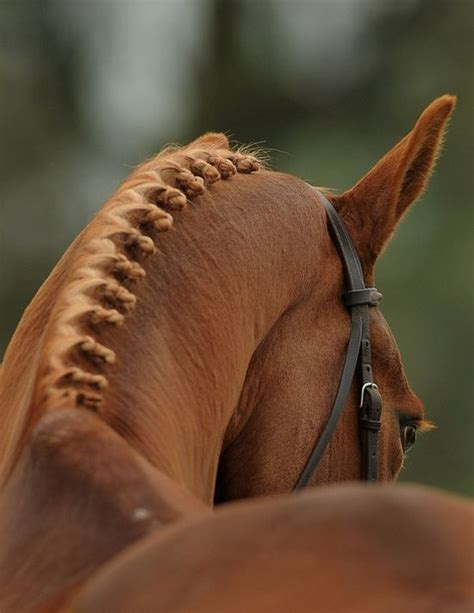 show pix of braid ten of the most beautiful horse mane braids the original