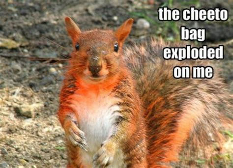 squirrel gets stuck in decoration and