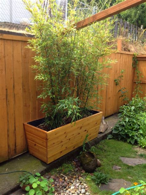 bamboo in planters clumps archives rake and palette