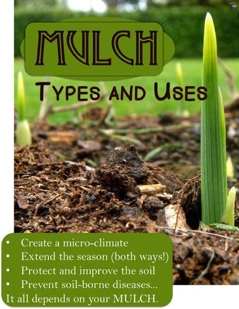 top 28 definition of mulch description soil jpg mulch definition meaning the biochar