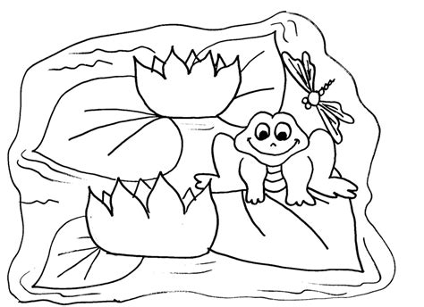 free coloring pages pond animals free frog coloring pages to print out and color