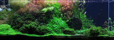 Aquascape Aquarium Plants Style Kompozycji Aqua Rebell