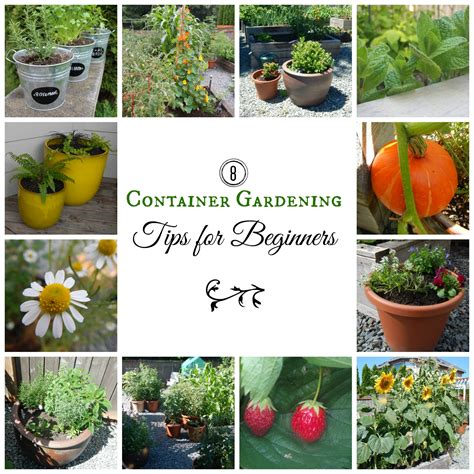 Gardening Ideas For Beginners 8 Container Gardening Tips For Beginners