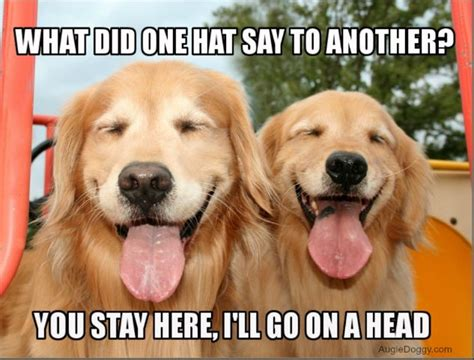 Golden Retriever Meme - funny golden retriever memes www imgkid com the image