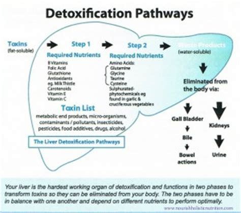 Supplements To Open Up Detox Pathways by What Happens When You Detox Nourish Holistic Nutrition