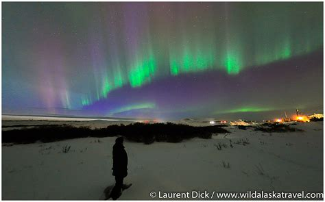 Northern Lights Tours by Alaska Travel Iditarod Finish Northern Lights