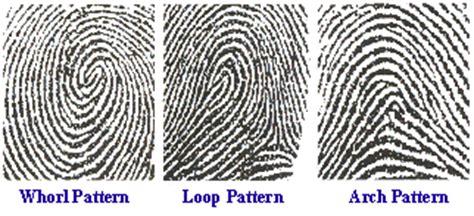 pattern types of fingerprints fingerprint line types behind the crime