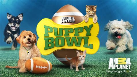 puppy bowl how puppy smiles can change the world justjohncrowley