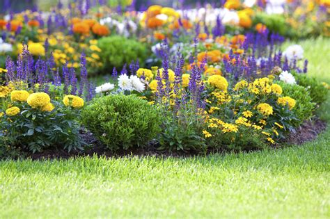 Flower Bed Garden Flower Gardening How To Start A Flower Garden