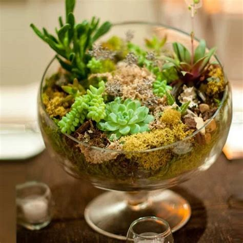 indoor succulent planting ideas   beautify