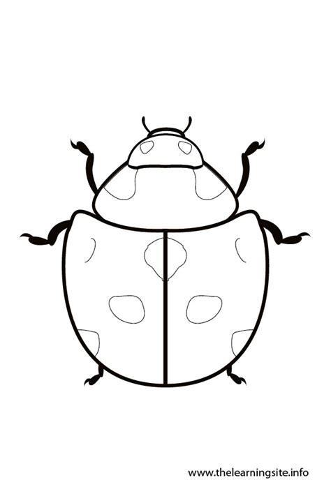 Ie8 Outline Bug by Image Gallery Ladybug Outline