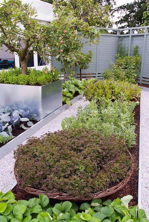 modern vegetable garden garden veggies pinterest