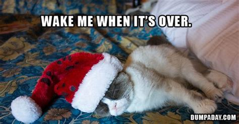 I Hate Christmas Meme - i feel you grumpy cat especially since because it s