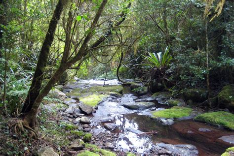 creek cground toolona creek circuit in lamington national park brisbane