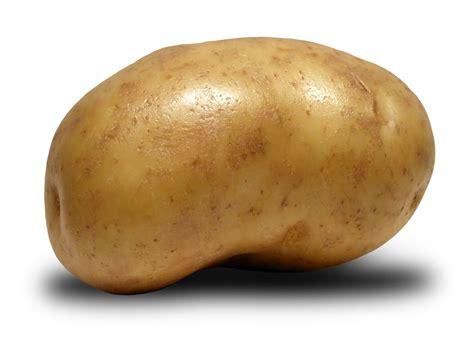 Bibit Wortel China jual bibit karet golden ri impor 4 ribu ton kentang