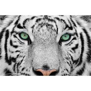Tiger Wall Murals get photo prints acrylic photo prints wallpaper murals