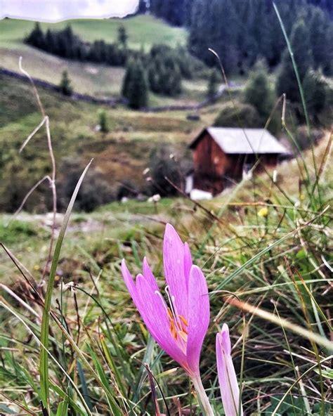 fiori velenosi per l uomo 6 fiori velenosi dovresti conoscere se vai in montagna