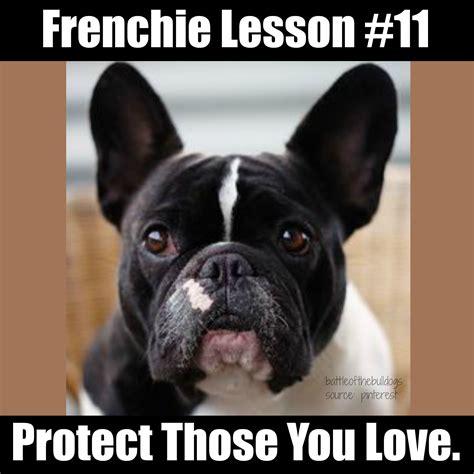 French Bulldog Meme - frenchie lesson 19 frenchie memes pinterest