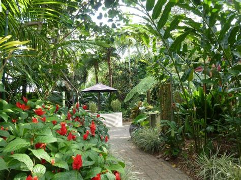 Botanic Gardens Cairns Le Lac Du Botanical Garden Picture Of Cairns Botanic Gardens Cairns Tripadvisor