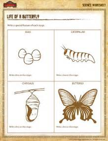 life of a butterfly printable 2nd grade science worksheet