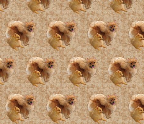 best shoo for pomeranian pomeranians fabric fabric dogdaze spoonflower