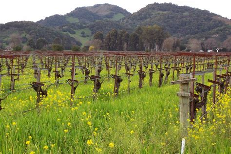 Photo Napa Valley by 20 Napa Valley Musts That Are So Much More Than Wine