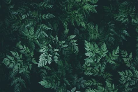 images background nature green leaves darkness
