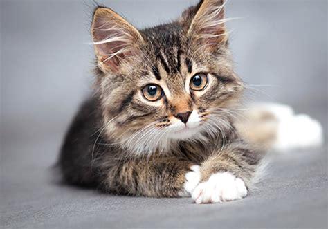 Cha T chat heureux en appartement comment savoir