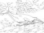 bowhead whale coloring page 301 moved permanently