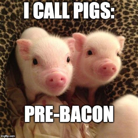 Piglet Meme - piglets imgflip