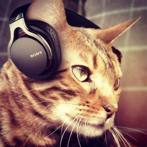 cat songs songs to sing to your cat and other feline favourites books do cats like the purrington post