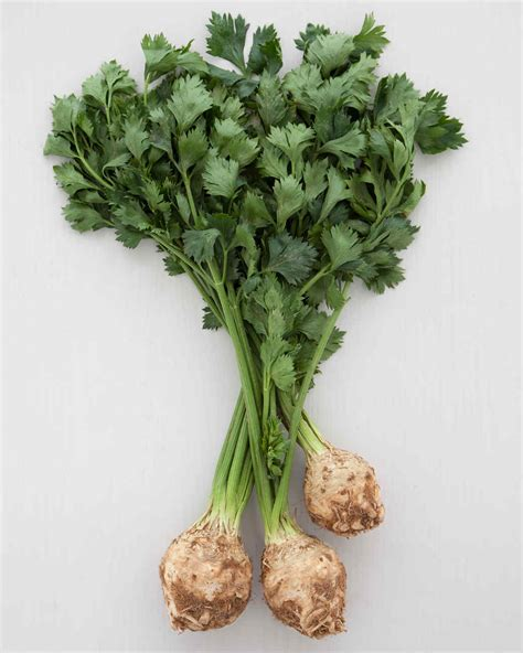 pungent root vegetable celery root recipes martha stewart
