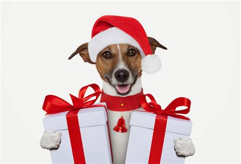 christmas gift guide for dogs
