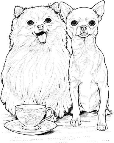 free coloring pages of how to draw chihuahua kolorowanka pomeranian i chihuahua kolorowanki dla